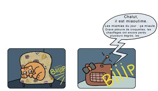 vie de chat4